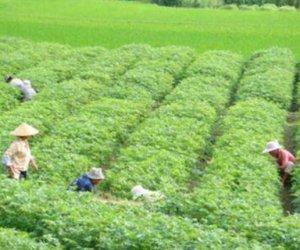 赴日本岛根县 技能实习生-种植业