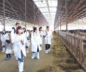 赴日本熊本県技能实习生-养牛