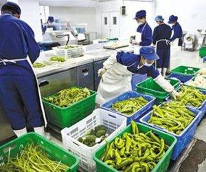 赴日本兵库县技能实习生-蔬菜加工