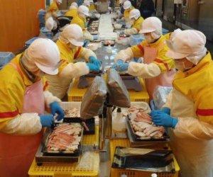 日本特定技能1号—食品加工
