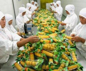 日本茨城县食品加工招聘