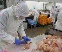日本奈良县鸡肉加工职