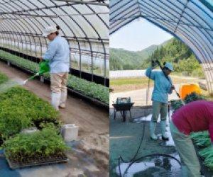 日本岛根县农业种植