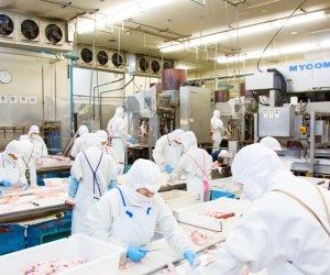 日本千叶-鸡肉加工职