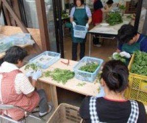日本徳島県 - 特定农业工