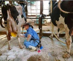 日本熊本県 - 特定畜牧业(养牛)