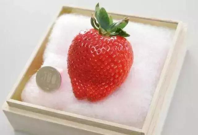 日本水果为什么那么贵?仅仅是因为好吃?答案出乎大部分人的想象